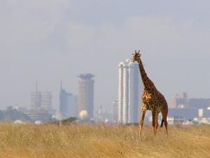 Kenia - Kenia królestwo ptaków