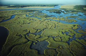 USA - Bagna namorzynowe Everglades