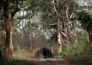 Indie - Indie Parki Narodowe