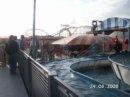 Brighton  najsłynniejsze molo w Anglii, na którym znajduje się park rozrywki