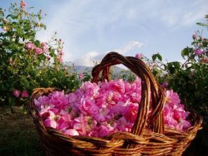 Bułgaria - Dolina Róż
