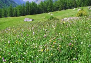 Włochy - Parki narodowe we Włoszech