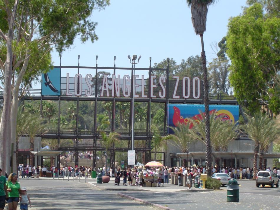 Zoo w Los Angeles