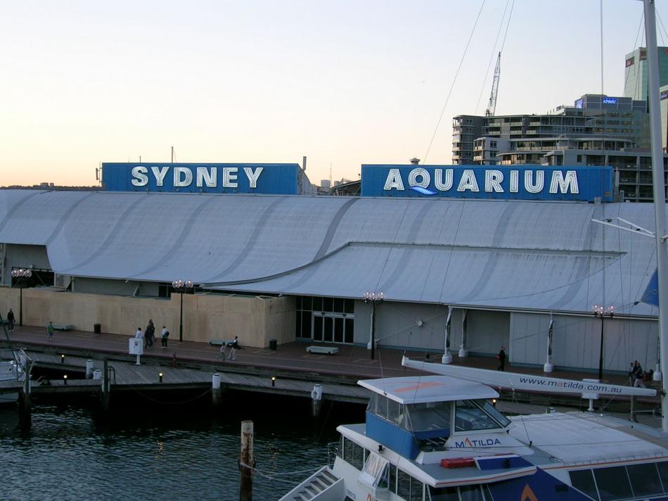 Aquarium w Sydney